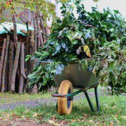 Grünschnitt und Gartenabfälle richtig entsorgen