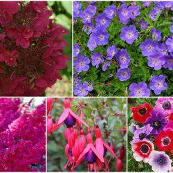 Die richtigen Pflanzen für Schattenplätze im Garten