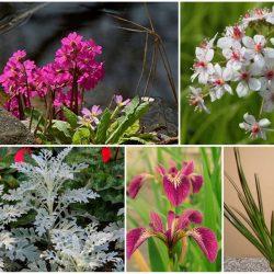 Die richtigen Teichpflanzen für einen kleinen Teich